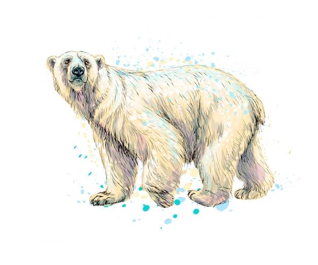 Абстрактный белый медведь из всплеска акварели, рисованной эскиз. векторная иллюстрация красок