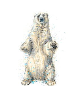 Abstract polar bear sitting from a splash of watercolor, hand drawn sketch.  illustration of paints