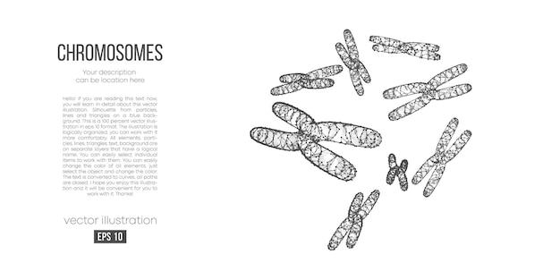 染色体の抽象的な多角形のシルエット