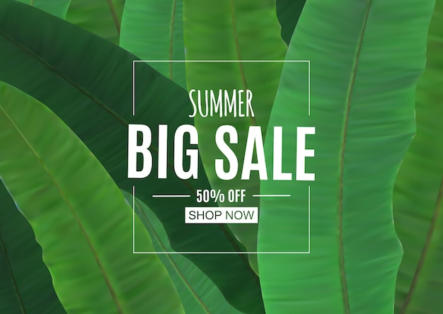Abstract summer sale background with palm leaves.