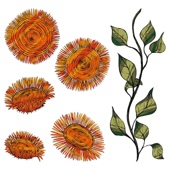 Abstract sunflowers, stem with leaves. decorative flowers in vintage, boho style isolated on white. set of hand drawn vector illustration. colored elements for design, decor.
