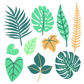 Abstract tropical leaves concept