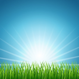Abstract vector rising sun over green grass background