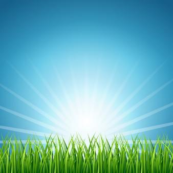 녹색 잔디 배경 위에 태양 상승 추상 벡터