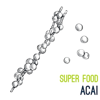 Acai. super food hand drawn
