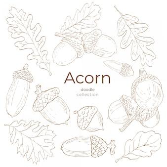 Acorn doodle collection