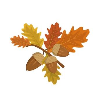 Желуди и дубовые листья на ветке лесных осенних фруктов