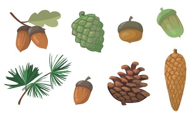 도토리와 솔방울 세트. 소나무 나무 가지, 전나무 나무 콘, 고립 된 오크 잎. 가을, 가을, 자연, 숲 개념에 대한 평면 벡터 일러스트