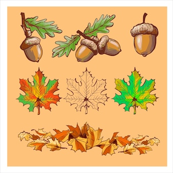 どんぐり、色違いの葉、枝。カラフルな秋の要素を設定します。ベクトルイラスト。秋のバナーの背景。