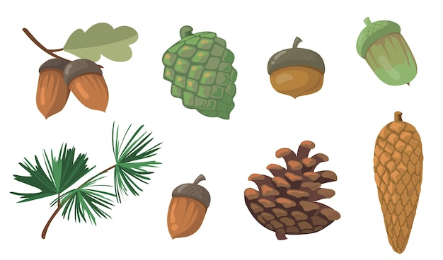 Acorns and pinecones set. pine tree branch, fir tree cone, oak leaf isolated . flat vector illustrations for autumn, fall, nature, forest concept