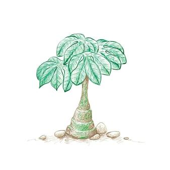 アデニアグラウカまたは象は庭の装飾のための多肉植物に足を踏み入れます