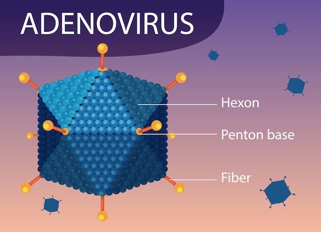 ウイルスアイコンの背景にアデノウイルスの構造図