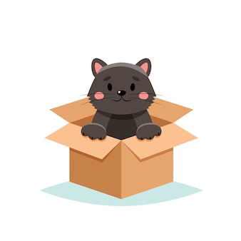 Принять домашнее животное - милый кот в коробке, на белом фоне