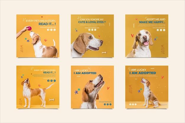 애완 동물 인스 타 그램 게시물 채택