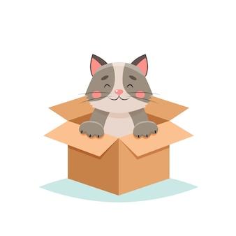 Adopt a pet - cute cat in a box,  on white background