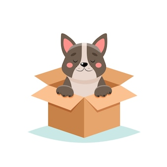 Adopt a pet - cute dog in a box,  on white background
