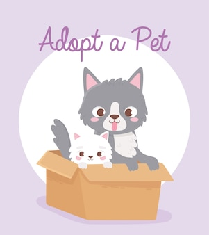 Adopt a pet, cute gray and white cats in the box  illustration