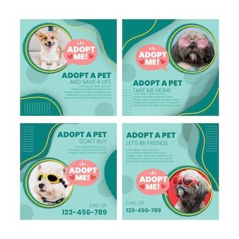 Adopt a pet instagram posts
