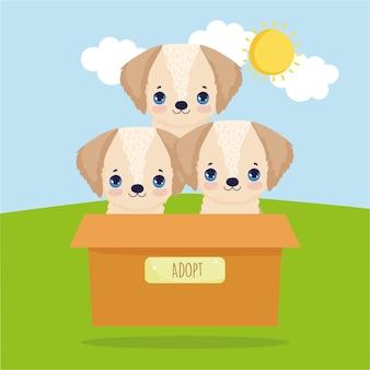 상자에 강아지 입양
