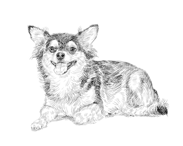 휴식에 사랑스러운 치와와 강아지 흰색 배경에 그림자와 함께 포즈