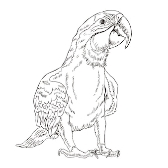 Adorable parrot coloring page in exquisite style