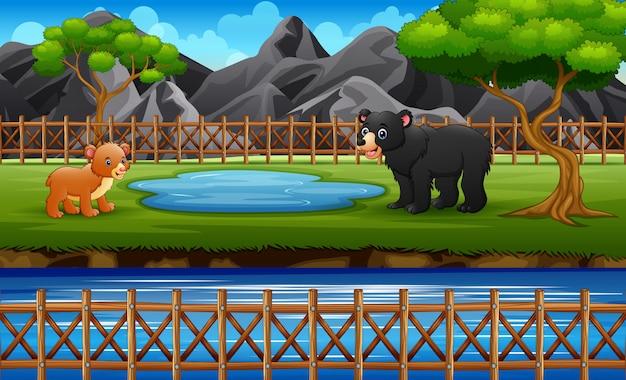 Взрослый медведь и медвежонок на водопое у реки