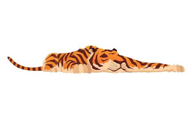 大人のビッグタイガー。野生動物からのかわいい動物。大きな猫。略奪的な哺乳類。描かれた漫画の動物のデザイン。白い背景で隔離のフラットベクトルイラスト。
