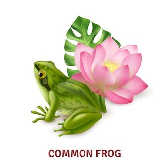 수련 성인 일반적인 개구리 반 수생 양서류 현실적인 근접 촬영 측면보기