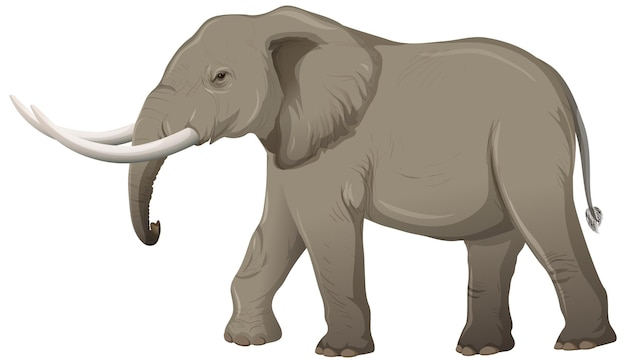 Adult elephant with ivory in cartoon style