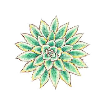 Aeonium sunburst 즙이 많은 또는 구리 바람개비 식물 정원을 위한 날카로운 가시가 있는 즙이 많은 식물