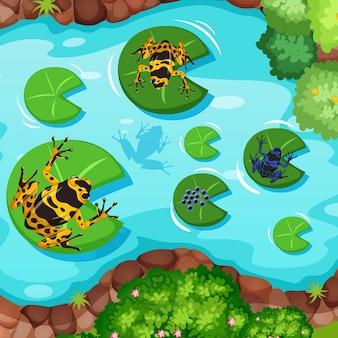 Scena aerea con rane esotiche e foglie di loto nello stagno