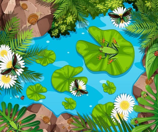 Scena aerea con rane e foglie di loto nello stagno