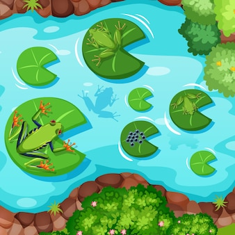 Aerial scene with frogs and lotus leaves in the pond