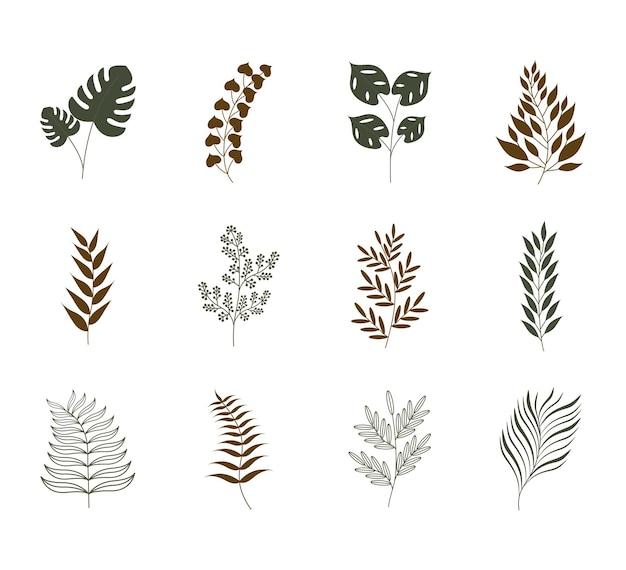 Набор эстетических растений