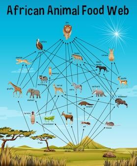 African animal food web per l'istruzione