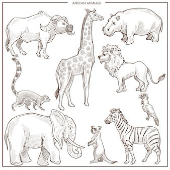 아프리카 동물과 조류 스케치. 벡터 격리 버팔로 황소, 기린 또는 하마와 사자