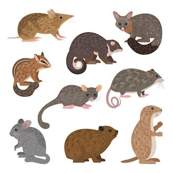 아프리카 육식 동물. leadbeater 주머니쥐 친칠라 다람쥐 프레리도그 산 피그미 주머니쥐 솔꼬리 주머니쥐 바위 너구리 동부 막대기 반디쿠 링꼬리 주머니쥐