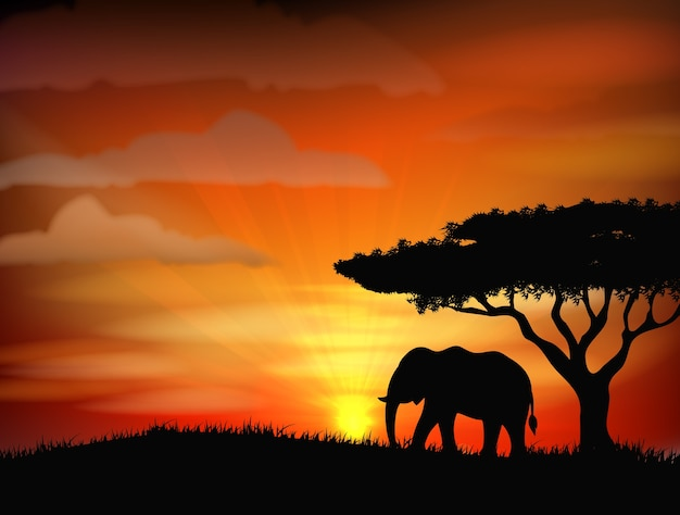 African elephant against a perfect african sunset sky
