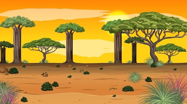 많은 큰 나무와 일몰 장면에서 아프리카 숲 풍경