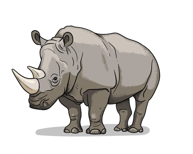 African savannah animal rhinoceros isolated in cartoon style. educational zoology illustration, coloring book picture.