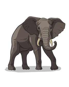 African savannah standing elephant isolated in cartoon style. educational zoology illustration, coloring book picture.