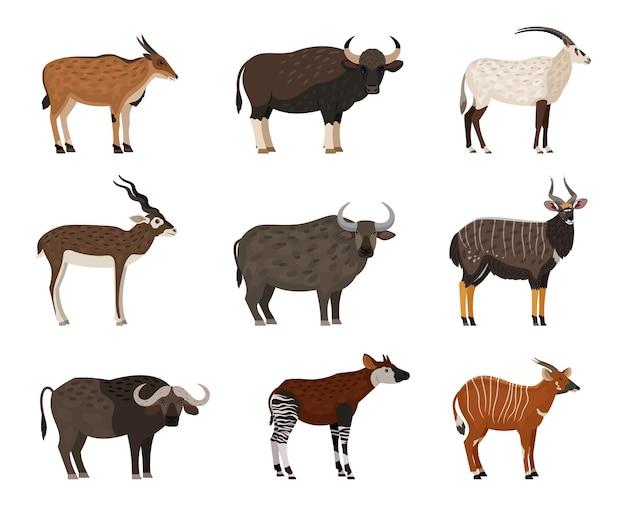 Набор символов африканской дикой природы. мультфильм диких жителей зоопарка, изображение существ саванны, векторные иллюстрации набор животных, изолированные на белом фоне