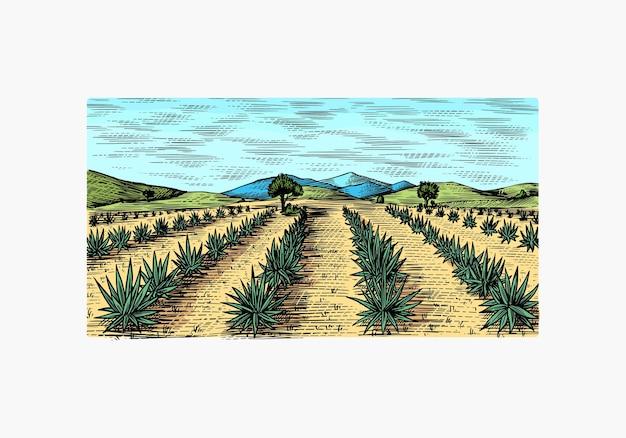 Поле агавы. урожай ретро пейзаж.