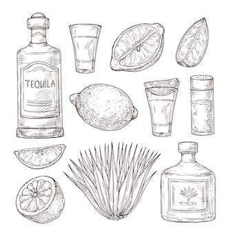 テキーラのスケッチ。ヴィンテージガラスショット、バーの食材と植物。孤立した描画アルコールボトル、塩レモンまたはライムのベクトル図。テキーラスケッチボトル、飲み物アルコールデザイン図