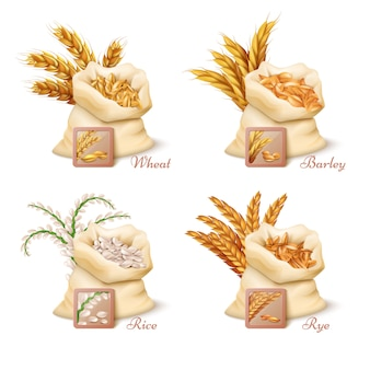 Agricultural cereals
