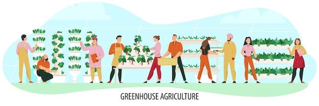 평평한 온실 식물을 재배하는 사람들과 농업 구성