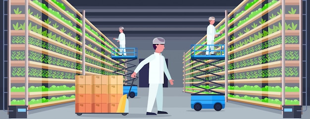Agriculture engineers working in modern organic vertical farm interior farming system concept pallet truck scissors lift platforms equipment green plants growing industry horizontal
