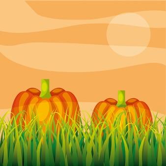 Agriculture plantation vegetable pumpkin