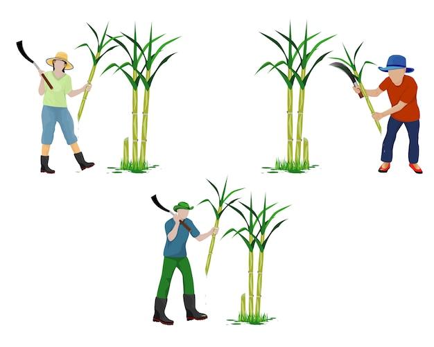 Agriculturist harvest sugar cane vector design