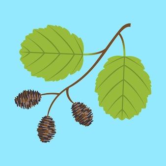 나뭇 가지 잎과 원뿔이있는 알더 나뭇 가지.
